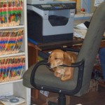 The office guard dog working hard.
