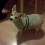 Kim's dog, Pookie.