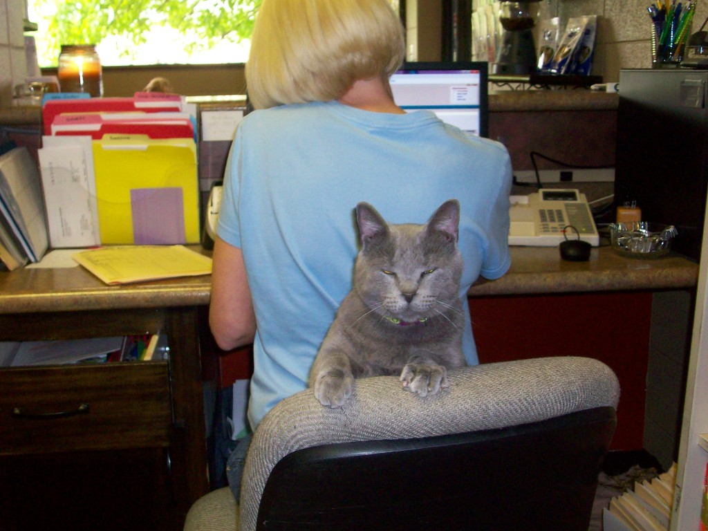 Stacey and the kitty cat at the front desk.
